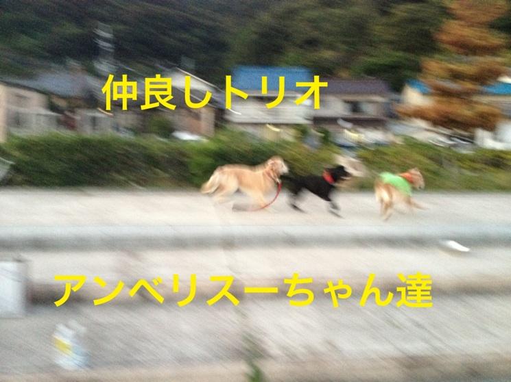 201210111932548c5.jpg