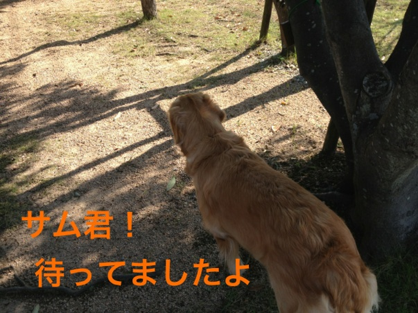 20121022215514800.jpg