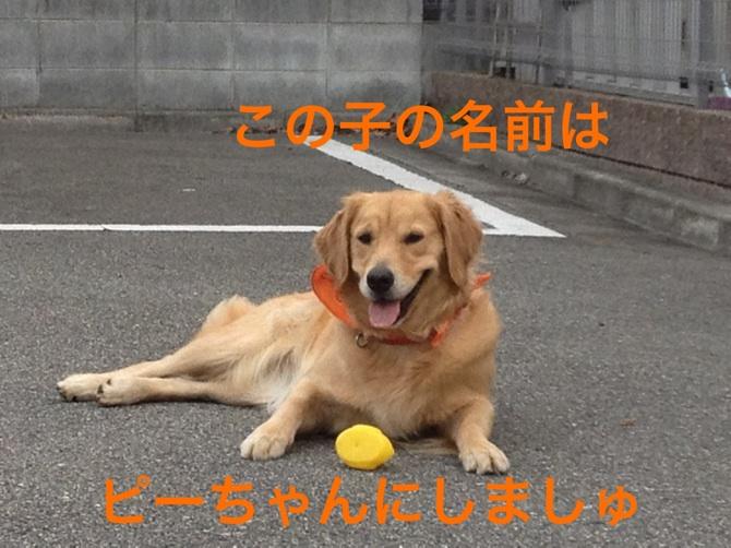 20121027223057372.jpg