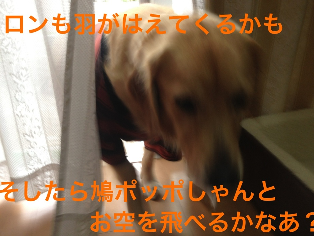 20121101212646650.jpg