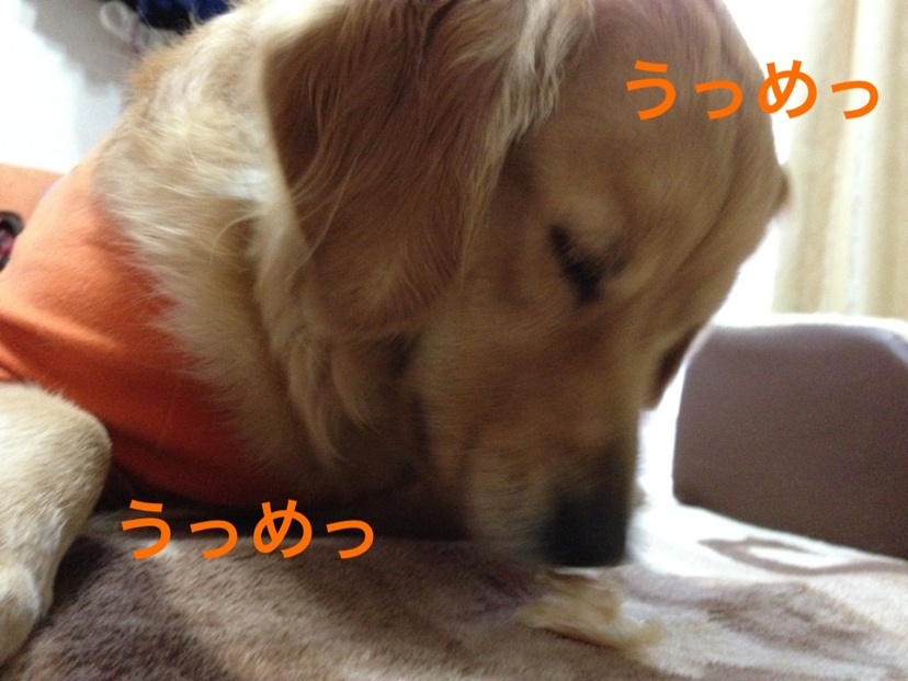 2012110417514337e.jpg