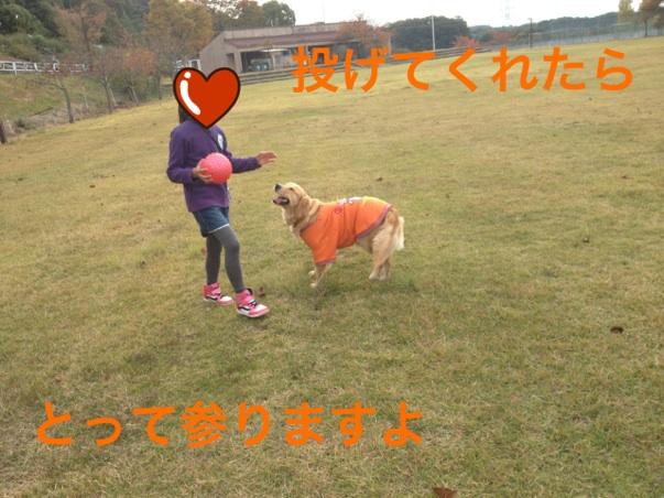 20121106220641c4d.jpg