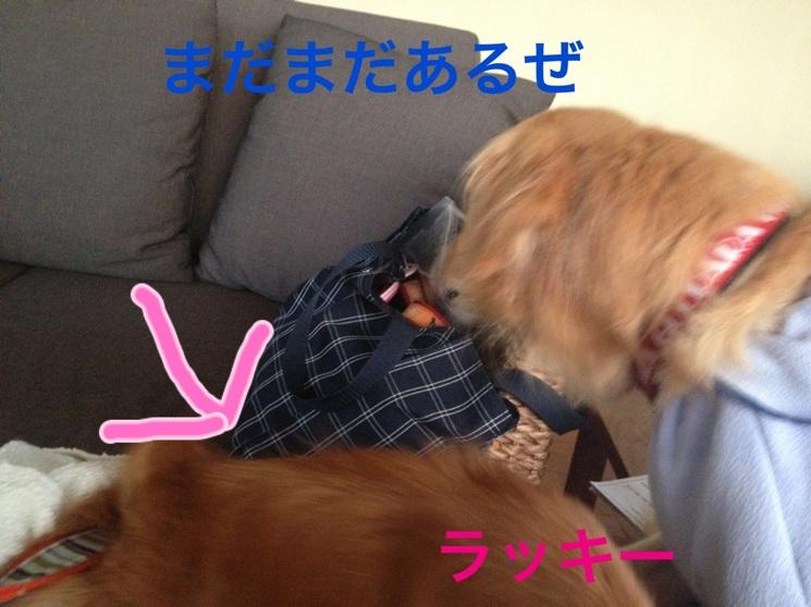 2012111021560861a.jpg