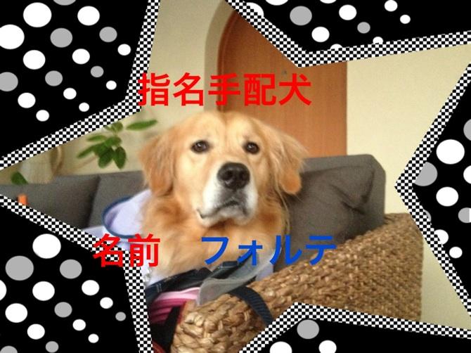 201211102214020d6.jpg