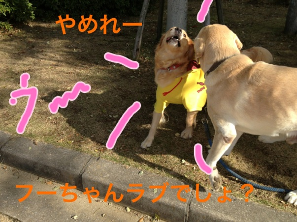 2012112123133819a.jpg