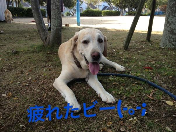 20121121231338b11.jpg