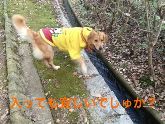20121122224529754.jpg