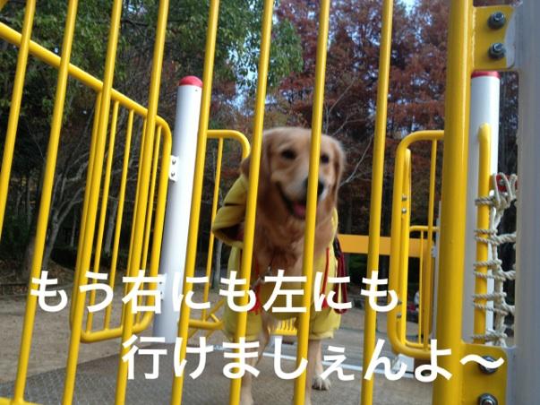 20121123203042ecd.jpg