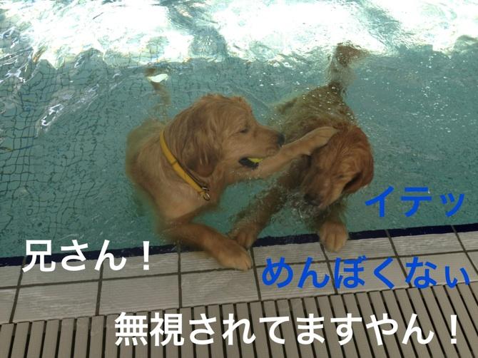2012112521552994d.jpg