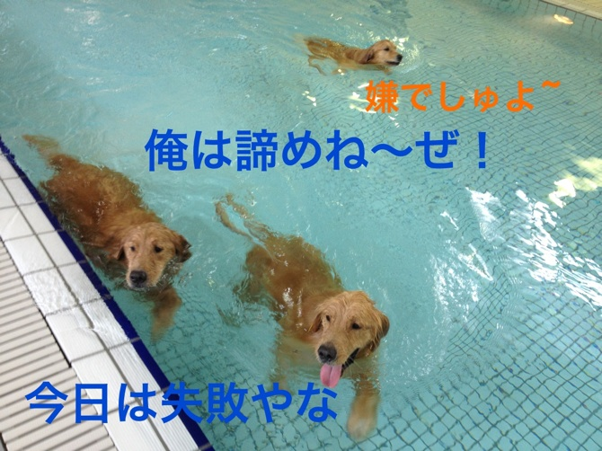 201211272142586e5.jpg
