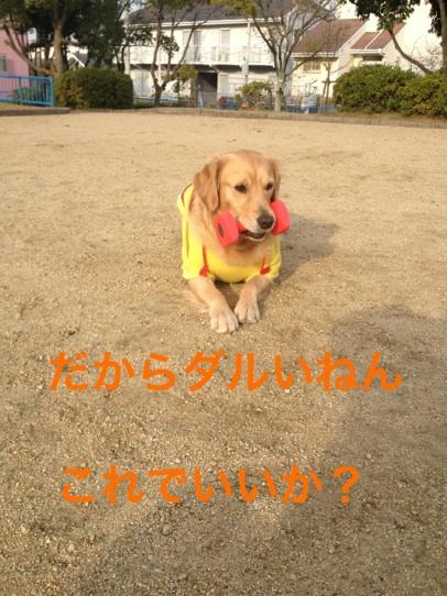 20121129214901d69.jpg