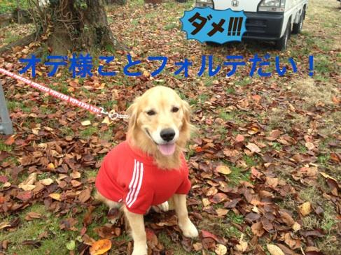 20121203230633a7b.jpg