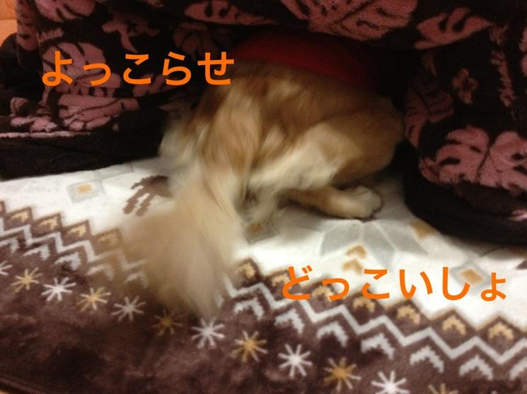 20121211201102748.jpg
