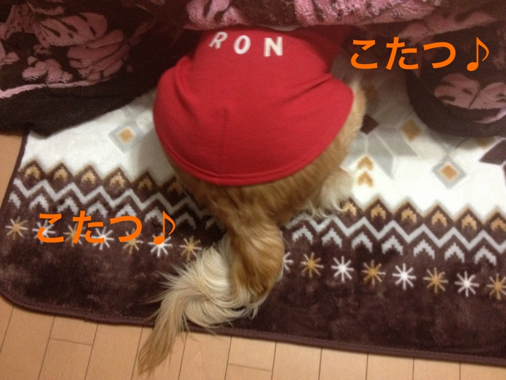 20121211201210ae0.jpg
