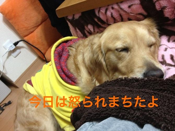 201212122215452ea.jpg