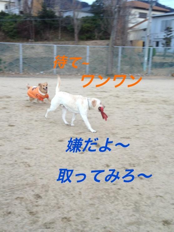 201301172304301c2.jpg