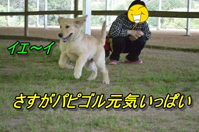 DSC_0039_20130501225055.jpg