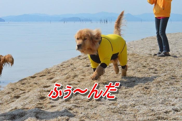 DSC_0056_20130511212612.jpg