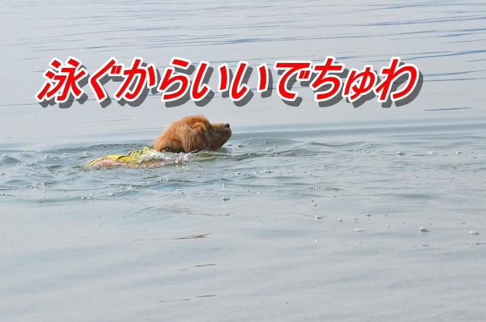 DSC_0062_20130511212611.jpg
