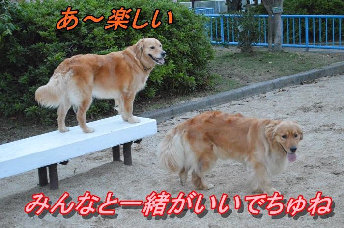 DSC_0097_20130622223611.jpg