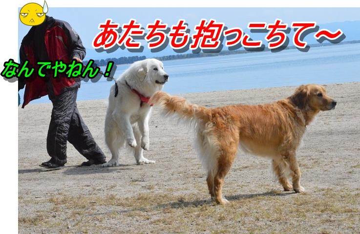 DSC_0100_20130511212745.jpg