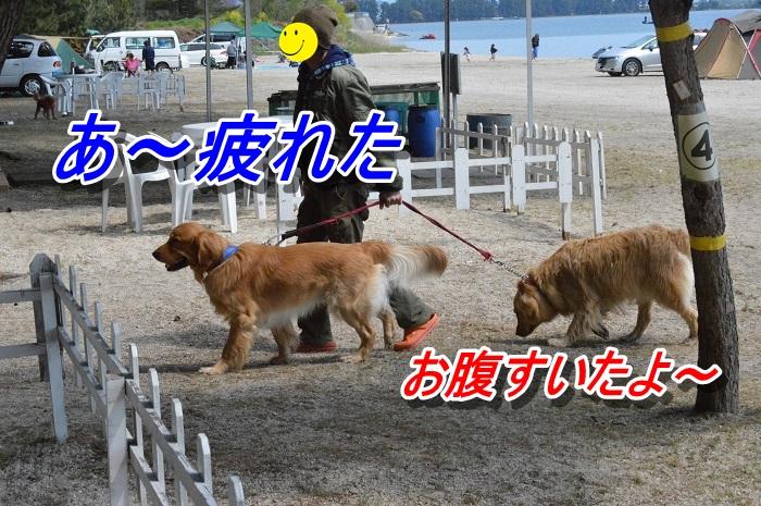 DSC_0107_20130511212741.jpg
