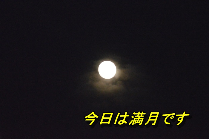 DSC_0108_20130622221838.jpg