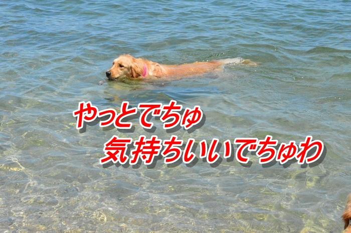DSC_0138_20130507112200.jpg