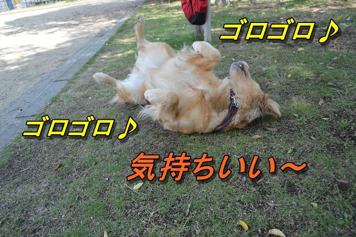 DSC_0177_20130629210102.jpg