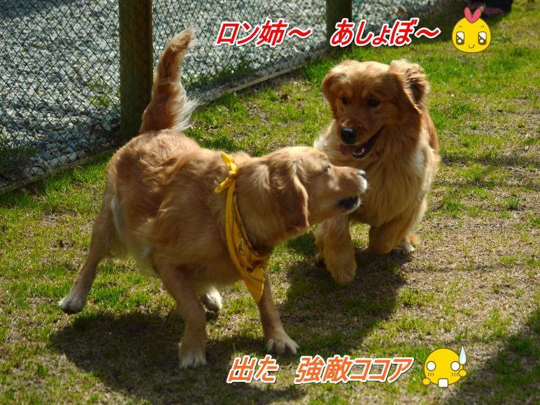 DSC_0306_convert_20130318211611.jpg