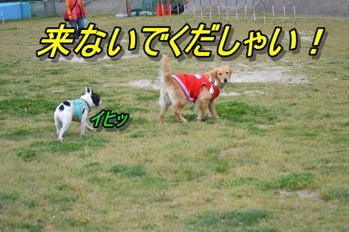 DSC_0312.jpg