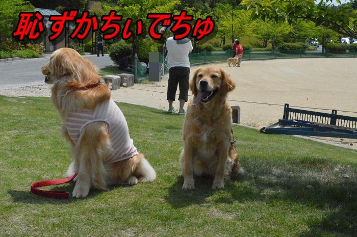 DSC_0340_20130528140428.jpg