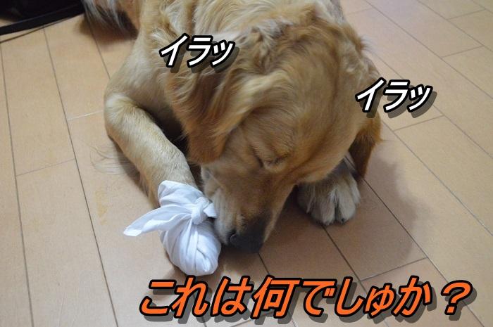 DSC_0341_20130515212209.jpg