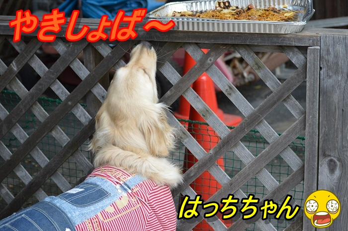 DSC_0345.jpg