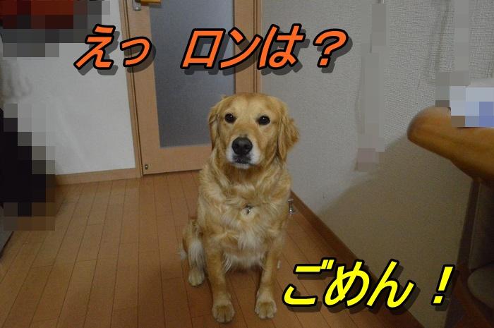 DSC_0356_20130512220110.jpg