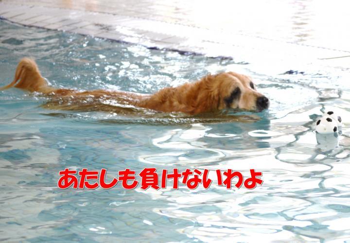DSC_0391_convert_20130319213235.jpg