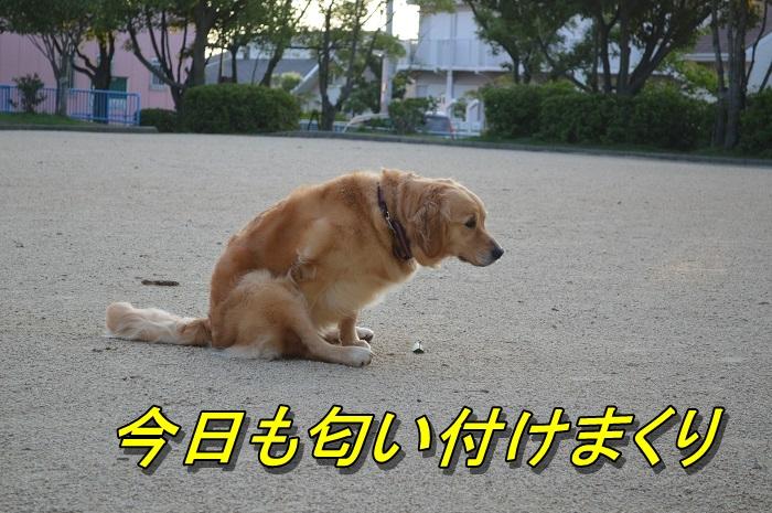 DSC_0418_20130707214933.jpg