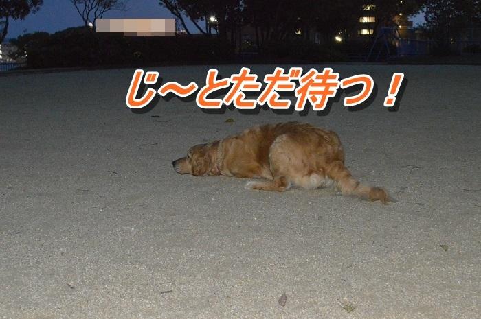DSC_0456_20130517121645.jpg