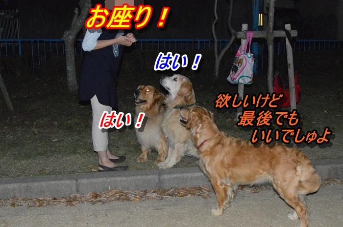 DSC_0466_20130517120924.jpg