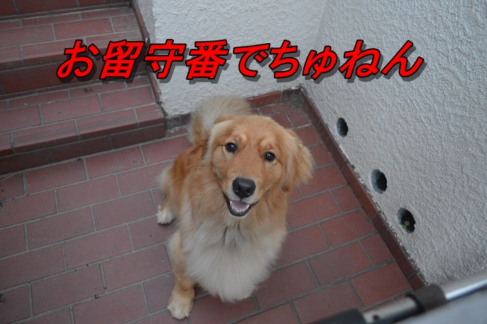 DSC_0480_20130707215009.jpg