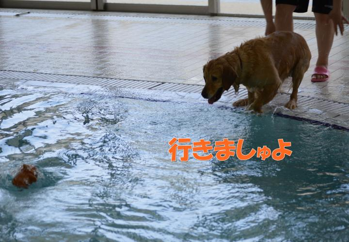DSC_0492_convert_20130319215635.jpg