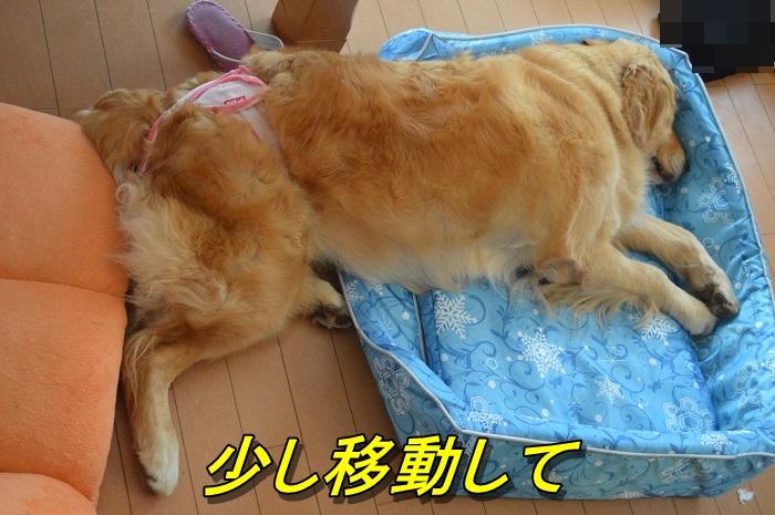 DSC_0501_20130708215748.jpg