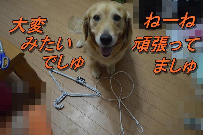 DSC_0505_20130709212722.jpg