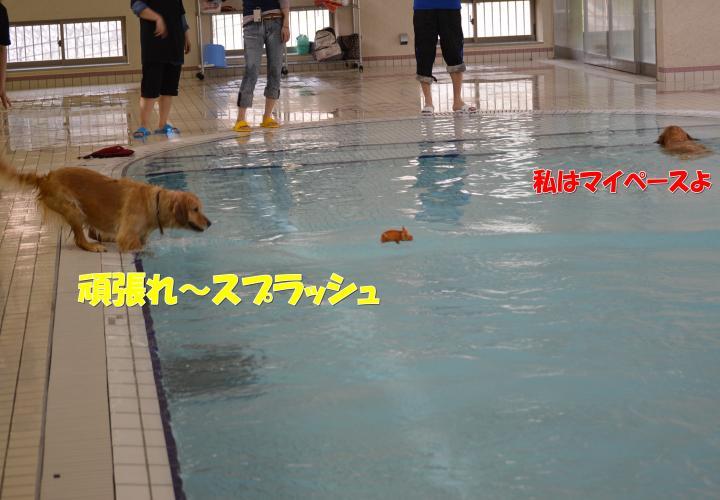 DSC_0550_convert_20130319213631.jpg