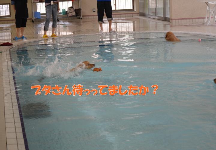 DSC_0555_convert_20130319213802.jpg