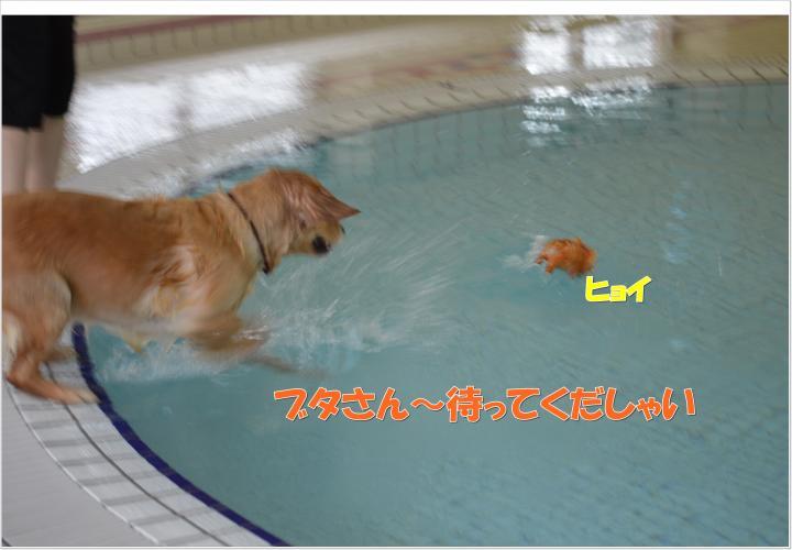 DSC_0580_convert_20130319213825.jpg