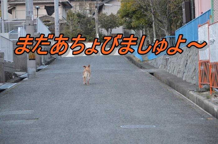 DSC_0582.jpg