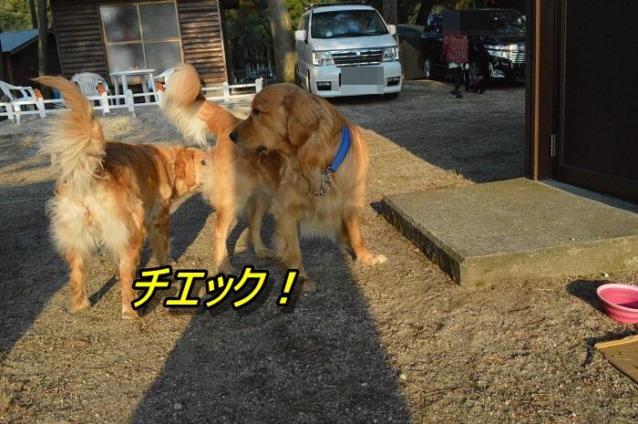 DSC_0599_20130510202741.jpg