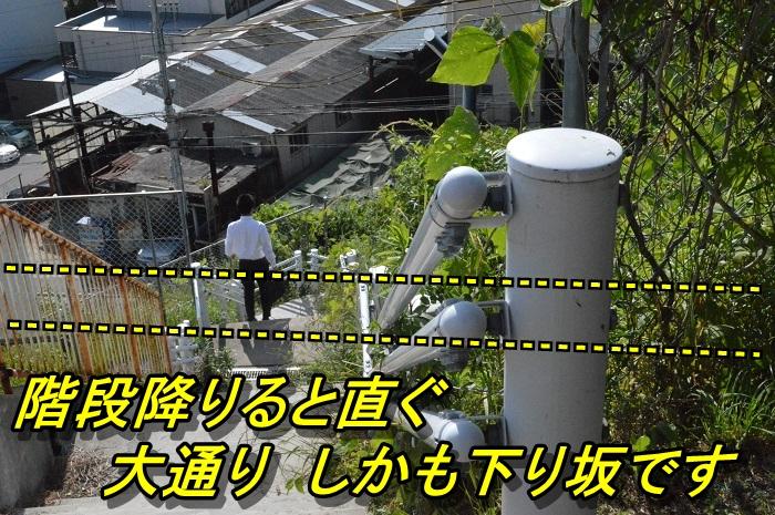 DSC_0600_20130608221105.jpg