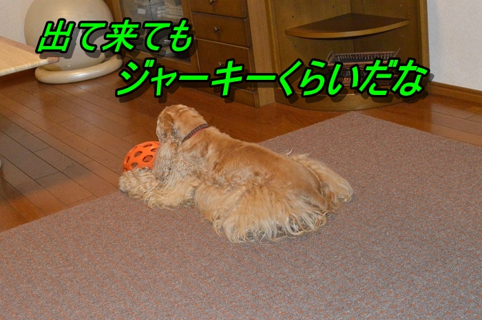 DSC_0635_20130602215208.jpg